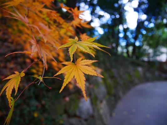 名古屋を代表する紅葉の名所としても有名。
