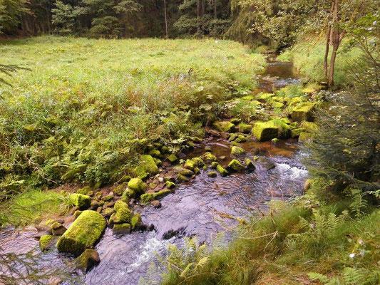 In der Kirnitzsch Steine einer ehemaligen Uferbefestigung? oder Brücke? oberhalb von Hinterdaubitz