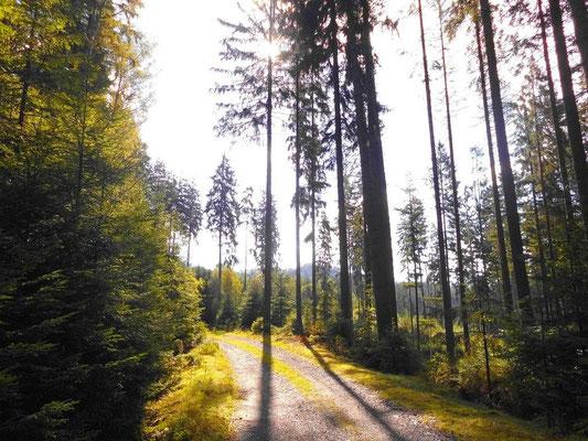 Blau markierter Wanderweg