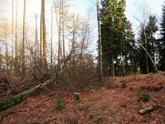 Hier zwischen Grenzstein 7/25 und 7/24 zweigte früher der originale Entenpfützenweg nach rechts in Richtung Beergründel ab