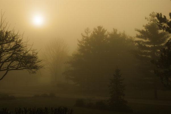 Shire Fog