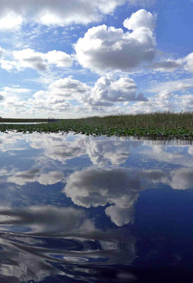 Everglade Skies