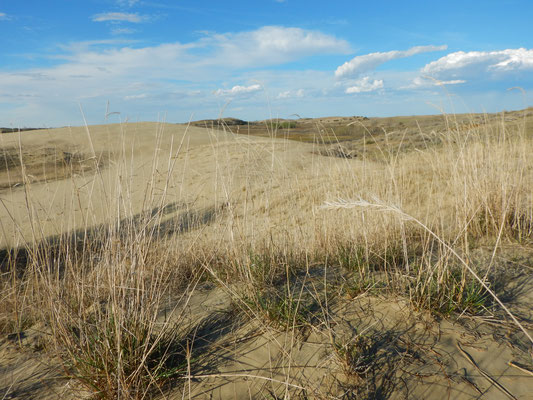 Great Sandhills