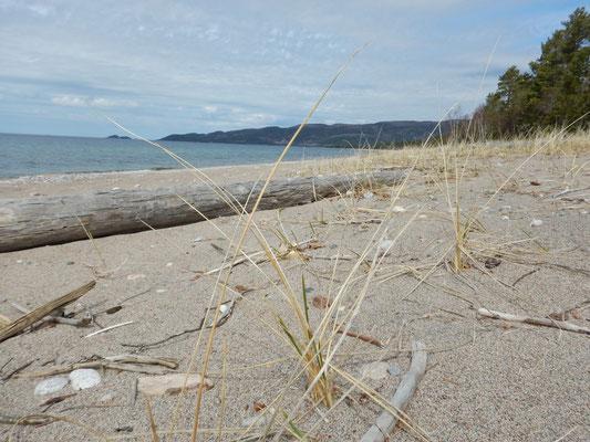 Sandstrand - anderer Sand
