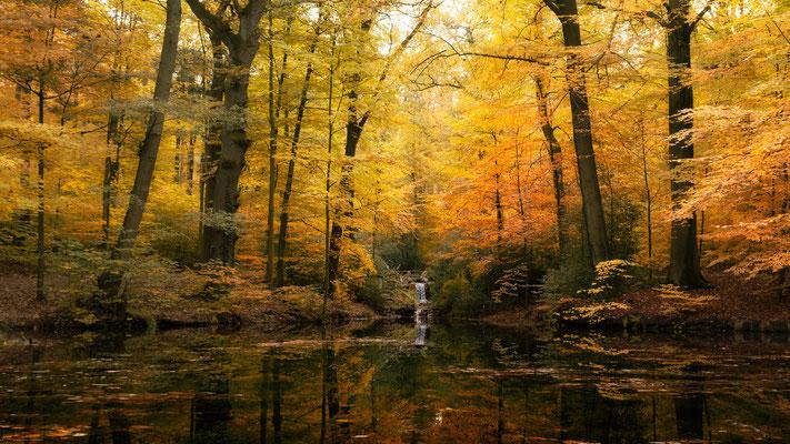 Holstenteich Georgsmarienhütte _ November 2018   All images: © Klaus Heuermann