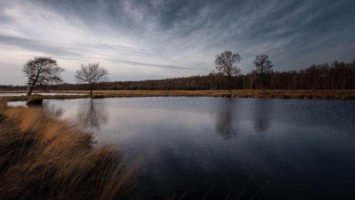 Großes Torfmoor _ Februar 2020  -   All images: © Klaus Heuermann  -
