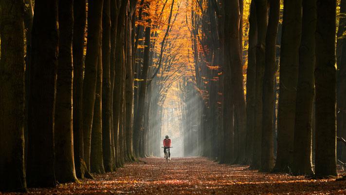 Lochem Niederlande _ November 2018   All images: © Klaus Heuermann