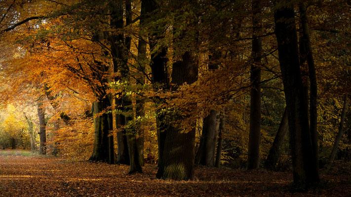 Osnabrücker Land _November 2018   All images: © Klaus Heuermann