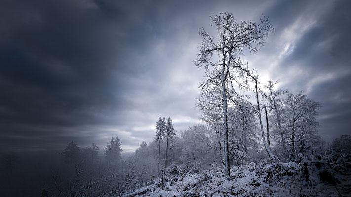 Teutoburger Wald _ Januar 2021 -   All images: © Klaus Heuermann  -