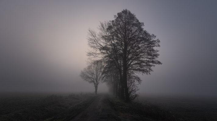 Ochsenmoor  -   All images: © Klaus Heuermann  -