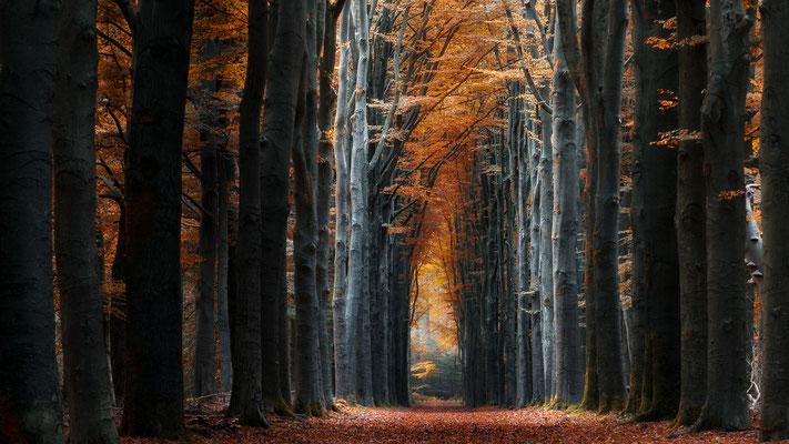 Niederlande Speulderbos  -   All images: © Klaus Heuermann  -