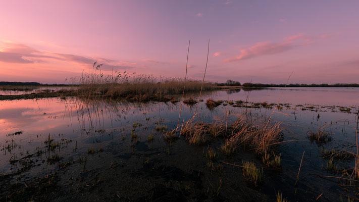 Ochsenmoor geflutet _ März 2020  -   All images: © Klaus Heuermann  -