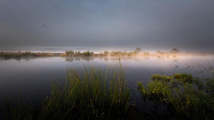 Venner Moor _ Mai 2020  -   All images: © Klaus Heuermann  -