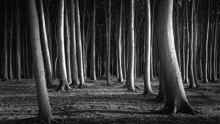 Nienhagen Ostsee  -   All images: © Klaus Heuermann  -