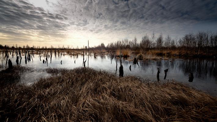 Rehdener Geestmoor  -   All images: © Klaus Heuermann  -