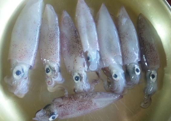 地元の魚屋さんで数センチのイカを買いました。真鶴産でこちらでは「ぐりいか」と言うそうです。
