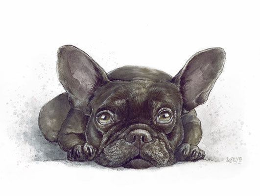 Bulldogge 30x40cm Auftragspreis 349€