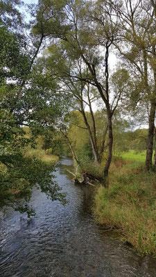 Herbst an der Nister in der Nähe der Abtei Marienstatt