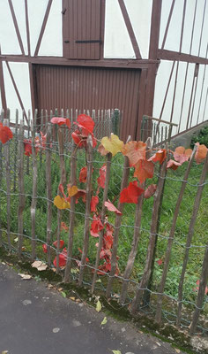 Der Herbst kehrt ein - Gesundheitswanderung Limbach Westerwald