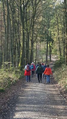 Gesundheitswandergruppe unterwegs auf dem Untersteig Sieg rund um Dauersberg