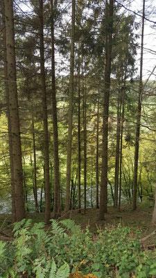 Bilck durch die Bäume auf die Große Nister (hat eine Länge von ca. 64 KM) 25.09.2019