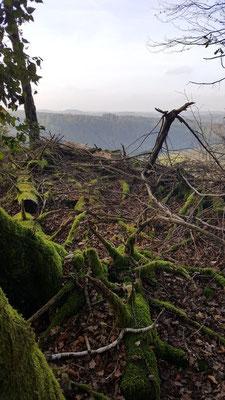 Bizzarre Wurzeln, Äste und Moose auf der Gesundheitswanderung Dauersberg