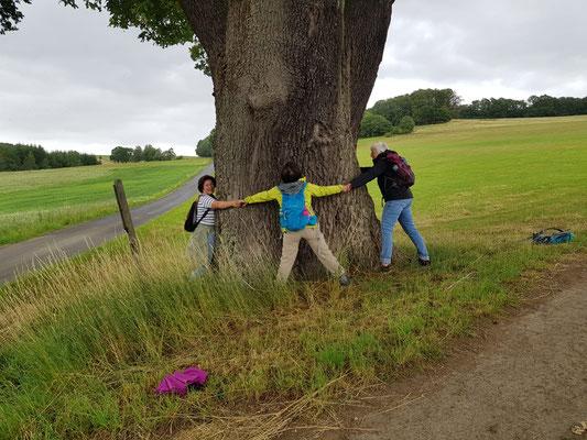 Ganz schön dick das Naturdenkmal dieser Eiche an dem Feldweg zwischen Heimborn und Obermörsbach