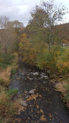 Der Lehmbach am Druidensteig in der Nähe von Limbach im Westerwald - Gesundheitswanderung 28.10.20