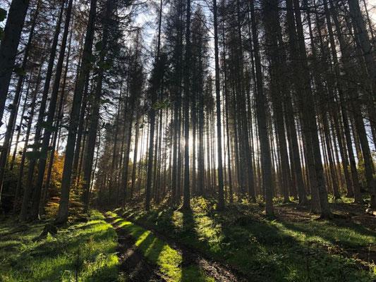 Gesundheitswanderung Limbach 28.10.20 Fichtenwald mit Moos im Sonnenlicht