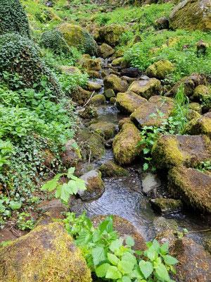 Waldbaden an den schönsten Orten des Westerwaldes 2021