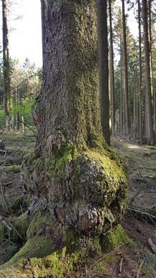 Mystische Bäume - entdeckt von Renate (mit Dank für die schönen Bilder) Molzhain