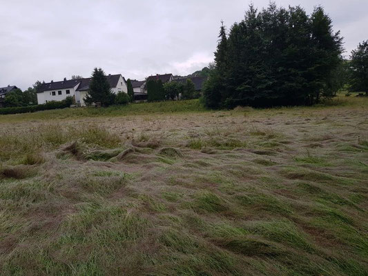 ... und noch einmal nasse Wiesen in der Nähe von Limbach im Westerwald
