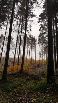 Herbstlicher Novemberwald im Gebhardshainer Land