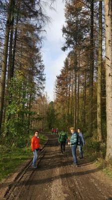 Die Gesundheitswandergruppe rund um Dauersberg auf Tour