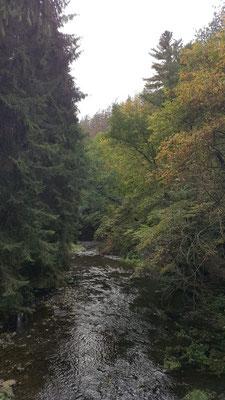 Nistertal - Nähe Wilhelmsteg 25.09.2019