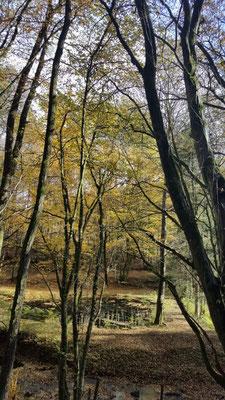 Herbst-Gesundheitswanderung Limbach am 28.10.20