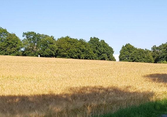 Gerstenfeld Nähe Kloster Marienstatt