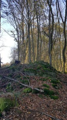 auf verwunschenen Pfaden - moosbewachsene Baslatblöcke oberhalb von Scheuerfeld