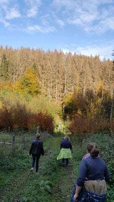 Gesundheitswandergruppe rund um Limbach am 28.10.20