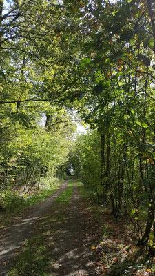 Eintauchen und Seele baumeln lassen in der Baumgalerie - Runde um Molzhain - 18.09.2019