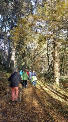 Gesundheitswanderung oberhalb von Limbach im Westerwald