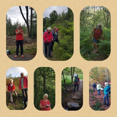 Foto-Collage geführte Gesundheitswanderung im Westerwald mit Kirsten 2020