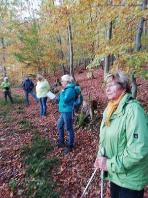 Wandergruppe während der Gesundheitswanderung rund um Limbach Westerwald