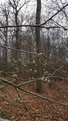 Ein Hauch von Frühling ist bereits erkennbar