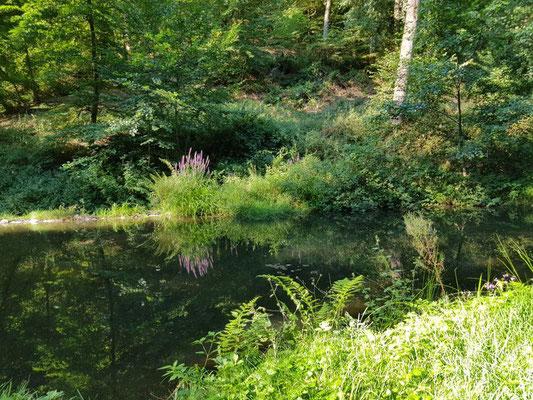 Waldbaden im Westerwald 2021 für Paare