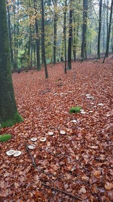 Pilze gedeihen besonders gut bei der feucht-warmen Witterung