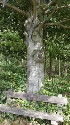 Baum mit Augen - mystisch und ein schöner Platz für die Übungen des Gesundheitswanderns Molzhain