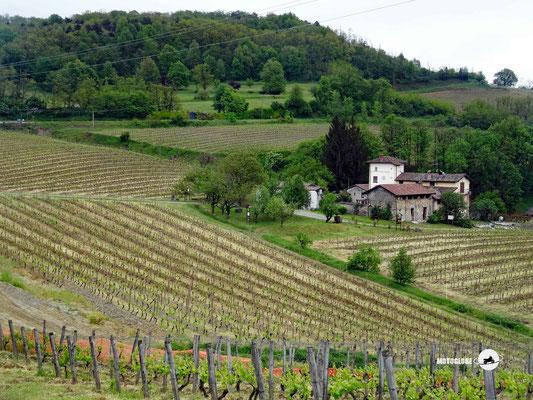 Die Weinberge lassen das Piemont erkennen