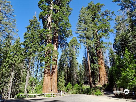 Unterwegs zum Sequoia Natl. Park