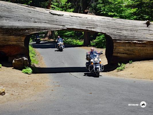 Das Mammutbaumtunnel